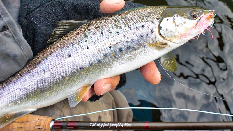 180405_mariager_trout.jpg