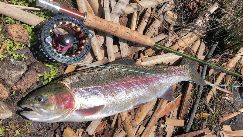 181208 lake taupo trout
